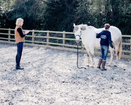 Equine Therapy Kent and Maidstone