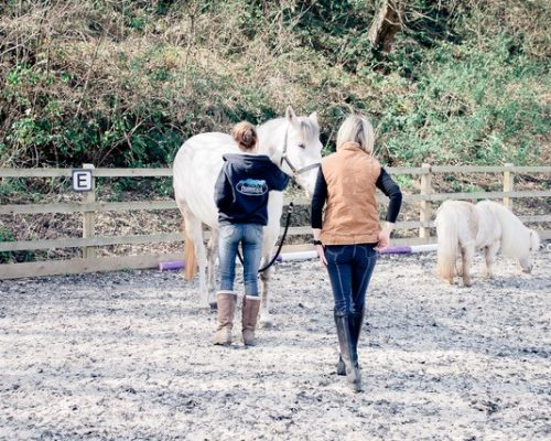 Equine Therapy Session 3 Kent and Maidstone