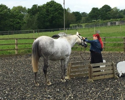 Equine Therapy Session Kent 6
